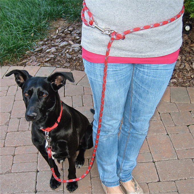 Mighty Mini Amazing Versatile Leash